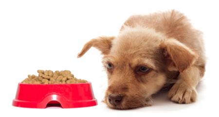 Lethargic Dog Won T Eat