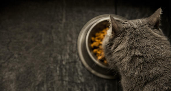 Is Royal Canin Urinary So Cat Food Good For Cats Petcoach