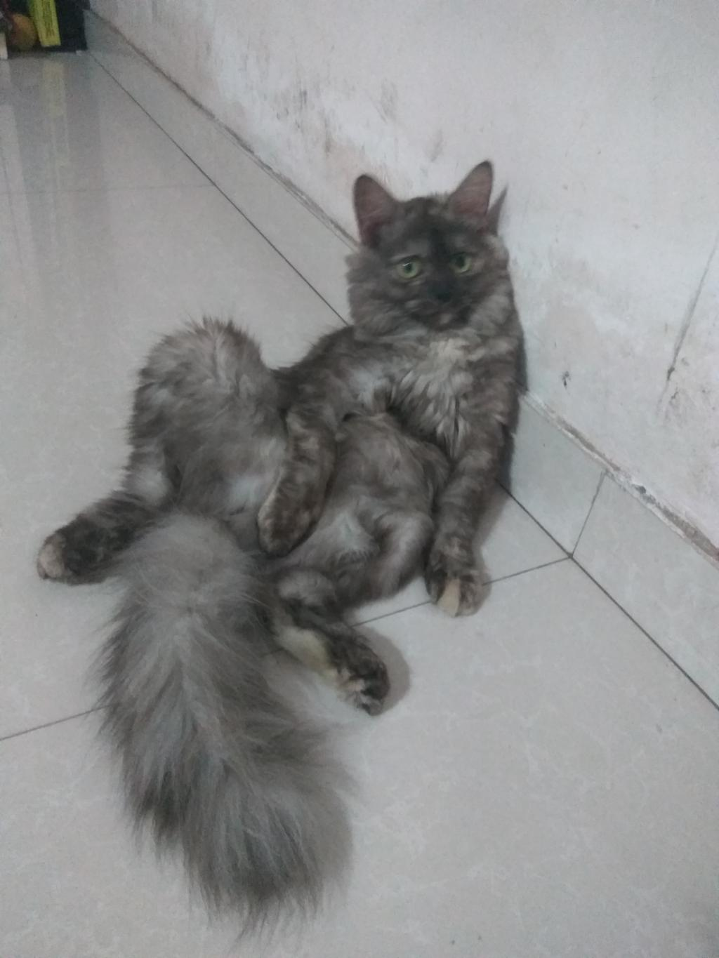 My Persian Kitten Is 8 Months Old And Her Weight Is 2 300kg Is She Healthy Or Underweight Petcoach