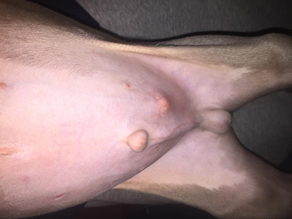 On my penis zit Bump on