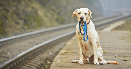 6 Tips to Make Sure Your Pet Never Gets Lost   PetCoach