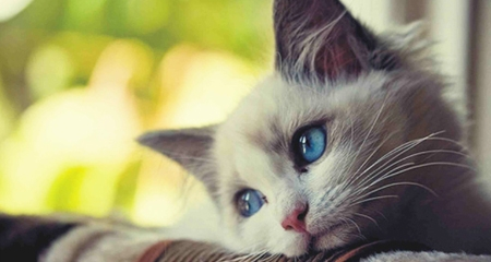 Top 5 Signs Your Cat May Be Hiding An Illness