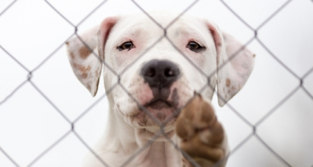 7 Arguments Against Breed Specific Legislation  278885b61926