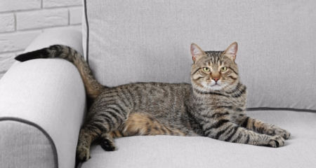 5 Great Ways To Cat Proof Your Couch