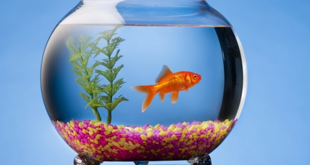 Overfeeding Fish Why It S A Problem And How To Avoid It Petcoach