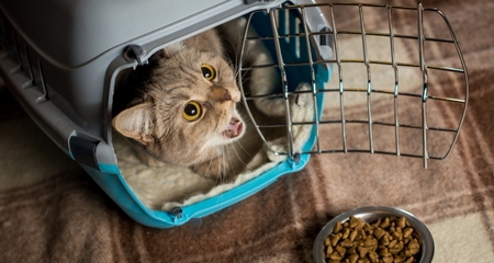 Can Cats Get Over A Sickness On Their Own