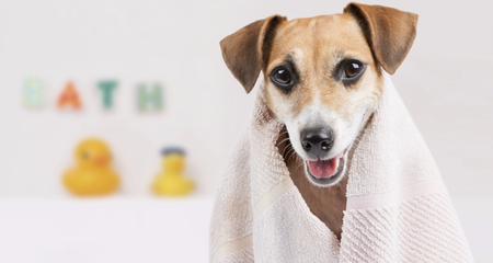 How To Bathe Your Dog In 5 Easy Steps Petcoach