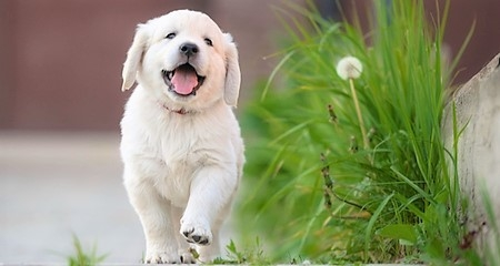 Why Should Male Dogs and Puppies Be Neutered? | PetCoach