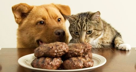 10 Common Foods That Are Toxic To Dogs And Cats