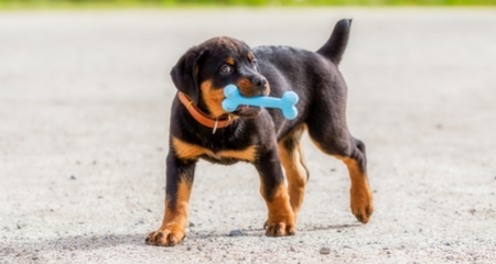 7 Great Toys For Teething Puppies Petcoach