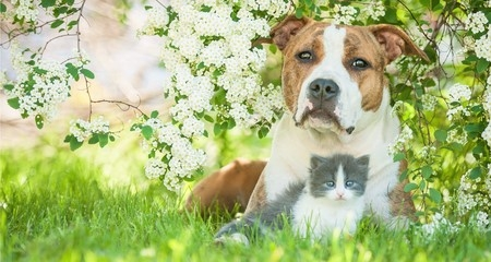 6 common plants that are poisonous to dogs and cats petcoach. Black Bedroom Furniture Sets. Home Design Ideas