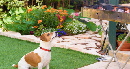 6 BBQ Foods That Are Dangerous for Dogs