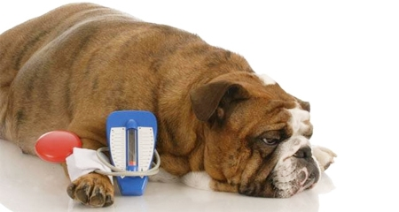 bệnh tiểu đường ở chó mèo