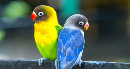 Can You Have Too Much Grit >> Grit Is It Necessary For Pet Birds Petcoach