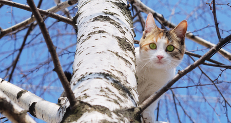 How to Get a Cat Out of a Tree: 4 Ways | PetCoach