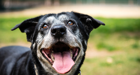 Common Behavior Changes and Problems in Senior Dogs