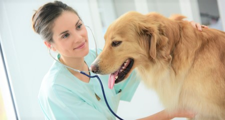 Kidney Disease Causes Signs Diagnosis And Treatment In Dogs And
