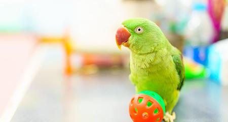 Teflon Toxicity in Birds: Can Teflon Fumes Kill Birds? | PetCoach