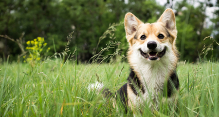 Anatomy And Function Of The Reproductive System In Dogs Petcoach