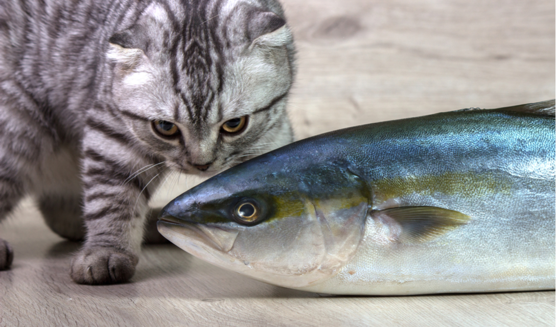 tuna water for cats