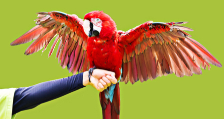 Common Injuries And First Aid For Birds Petcoach