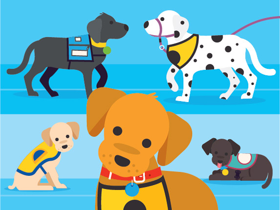Training Service Dogs From Puppy To Invaluable Partner Petcoach