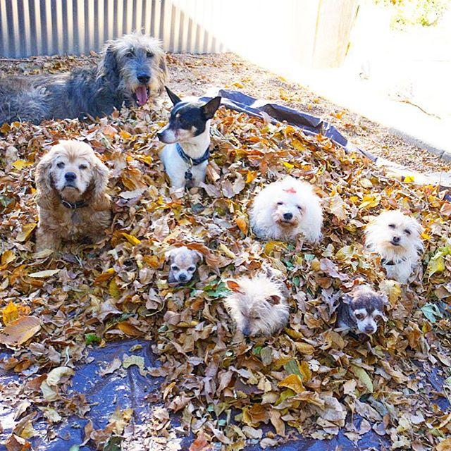 senior_dogs_4.jpg