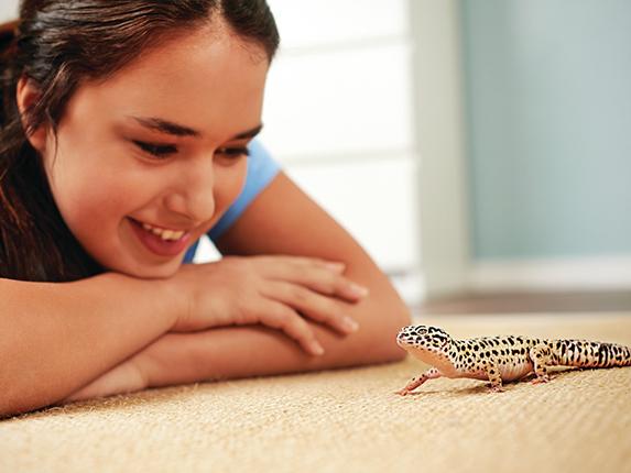 fun facts about leopard geckos petco petcoach