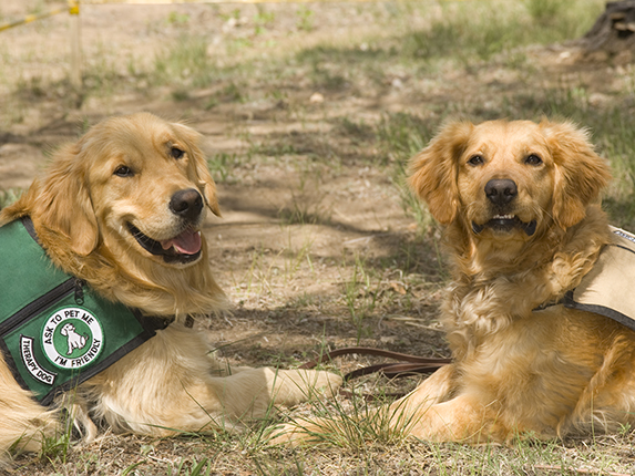 How Does Your Dog Become Service Dog Certified