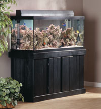 How To Select The Right Aquarium And Stand Petcoach