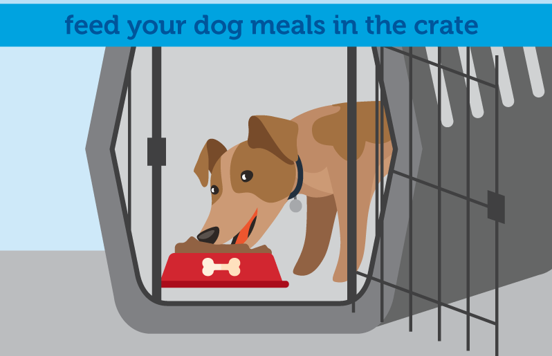 How To Crate Train A Nervous Dog