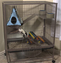 Wire Cage For Rats