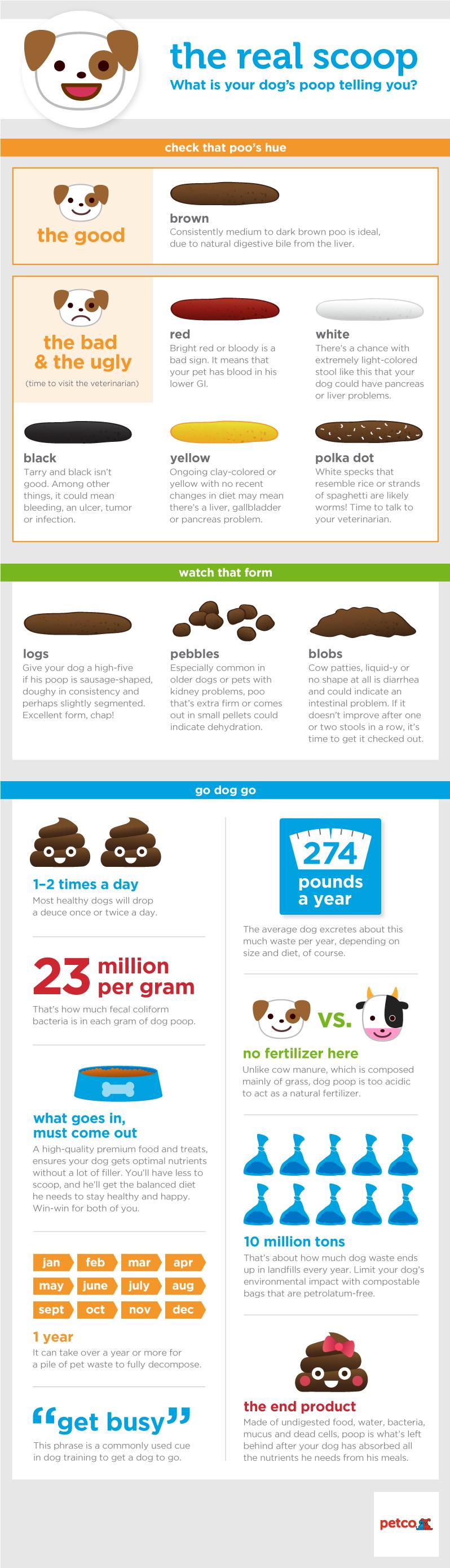19 Beautiful Dog Poop Color Chart