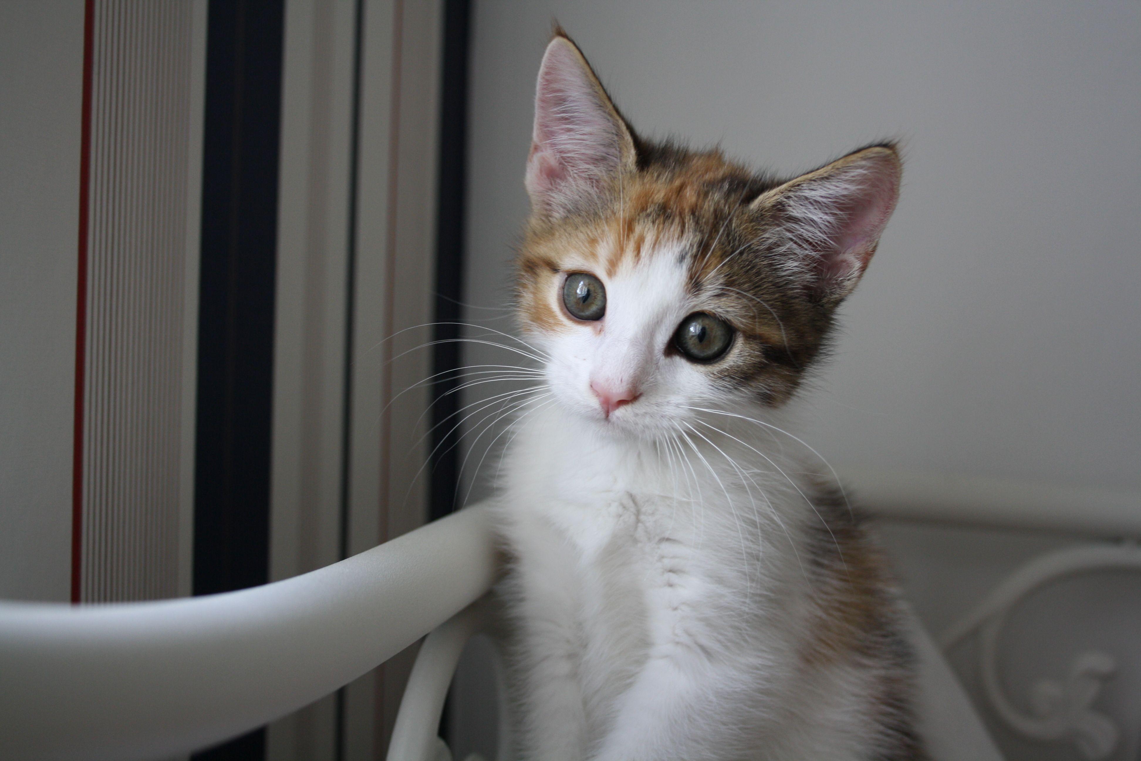 cat in swedish cute cat 2018