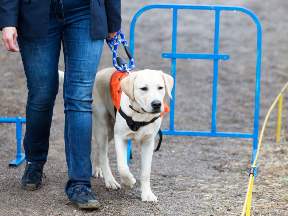 service dogs explained | petcoach