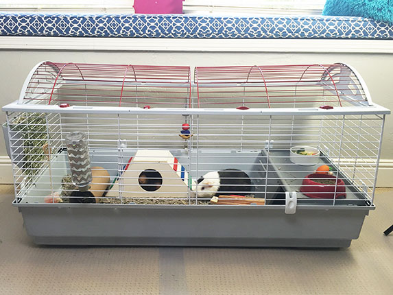 How To Set Up A Cozy Habitat For Your Guinea Pig Petcoach