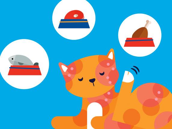 Common Allergens In Cat Food