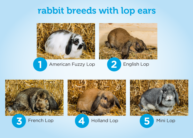 How To Celebrate Your Bunny On International Rabbit Day Petcoach