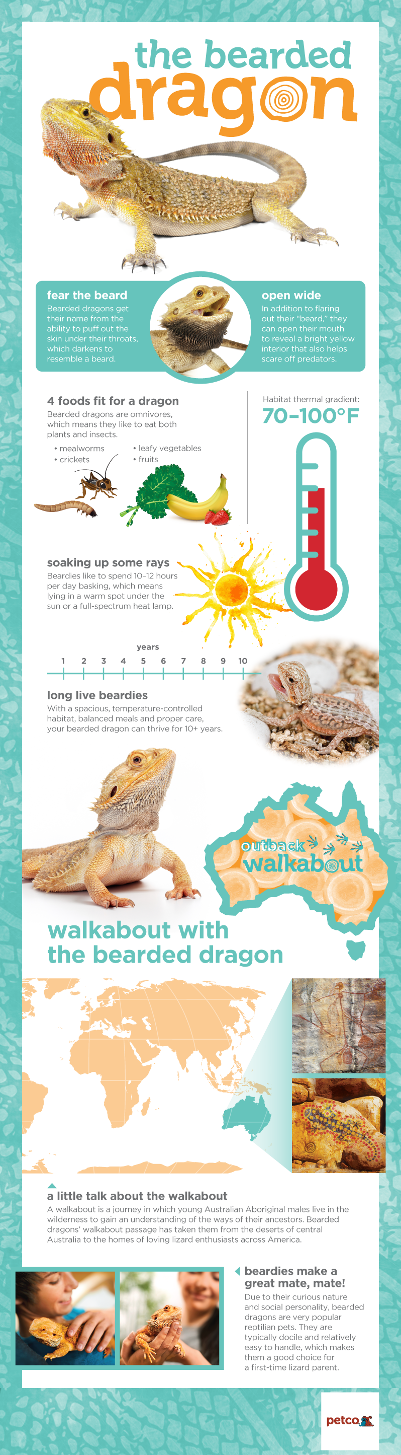The Australian Bearded Dragon Can Change Its Based On Temperature