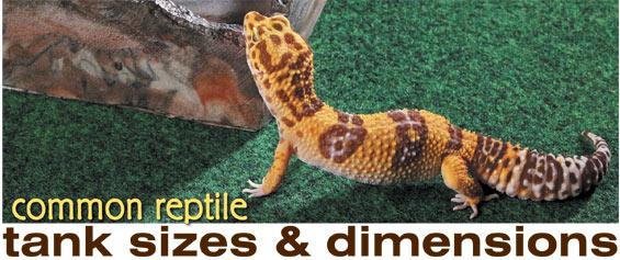 Reptile Habitats Choosing An Enclosure For Your Herp Common Tank