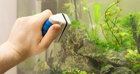 10 Easy Ways To Control Algae Growth In Your Aquarium Petcoach