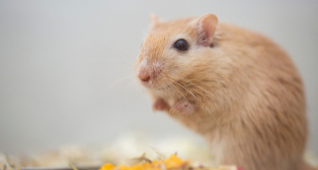 Causes And Signs Of Kidney Disease In Small Pets Petcoach