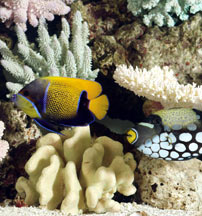 Tips For Setting Up A Fish Only With Live Rock Fowlr Aquarium