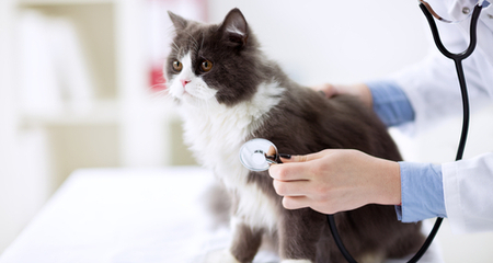 Preventative Health Care in Cats: What to Expect and Why Annual Exams  Matter | PetCoach
