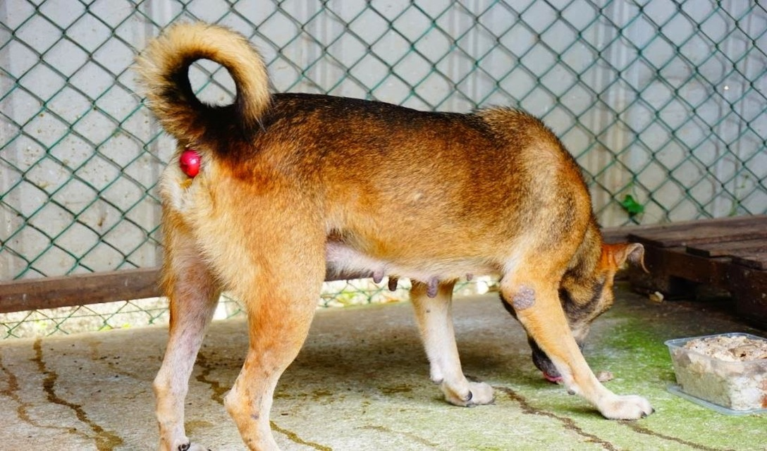 Rectal Prolapse In Dogs Petcoach
